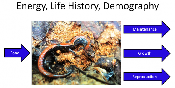 Physiological and Demographic Drivers of Salamander Responses to Climate Change